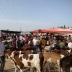 Viehmarkt in Kashgar
